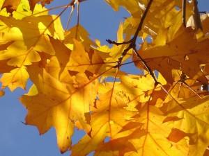 pożyczka jesień